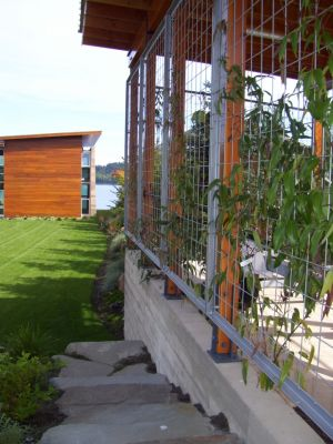 Vines soften and screen the boat storage