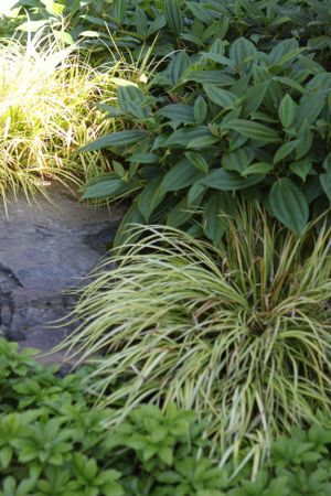 Variegated grasses, evergreen shrubs, ground cover and boulders make for an interesting stroll through the garden year round