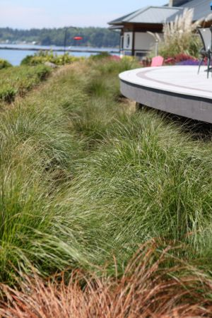 Grasses and native plant species provide wildlife habitat between the deck and the shoreline