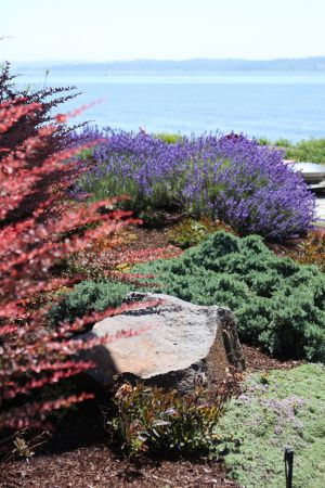 The plant palette becomes warmer and draws one toward the stunning view of Puget Sound