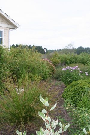 The rain garden captures roof runoff and provides another interesting element in the garden