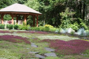 Drought tolerant and fragrant Thyme acts as a lawn alternative