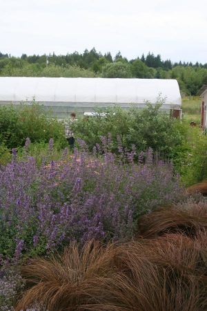 A variety of color and contrast creates visual interest throughout the site and softens views of the hoop houses and outbuildings