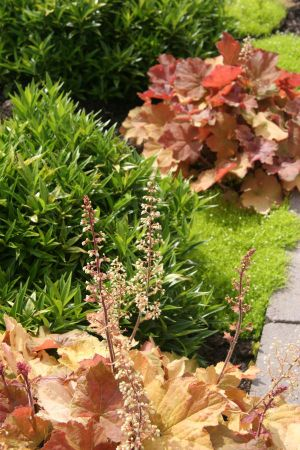 Contrasting plant color and texture adds visual interest