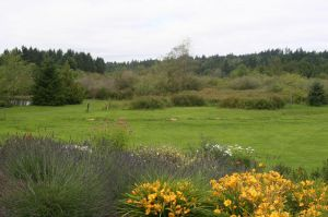The herb and perennial garden capitalize on the drier portion of the site and add an inviting foreground to the meadow view