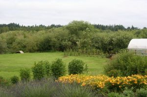 The herb and perennial garden creates a foreground for the meadow view