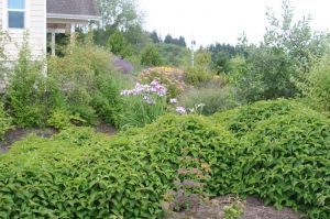 The rain garden captures roof runoff and provides another interesting visual element in the garden
