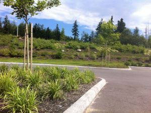 The parking area is surrounded by a lawn and layered plantings