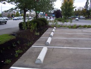 Pavement edge was cut to create a narrow space for the rain garden