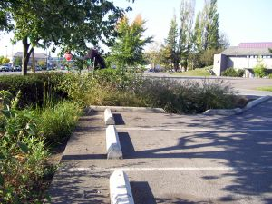 Flourishing rain garden traps toxins in stormwater runoff